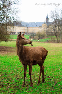 Wild animal park with a palace in the background just an hour outside of Grafenwoehr. Photo by Alexis Tucker.